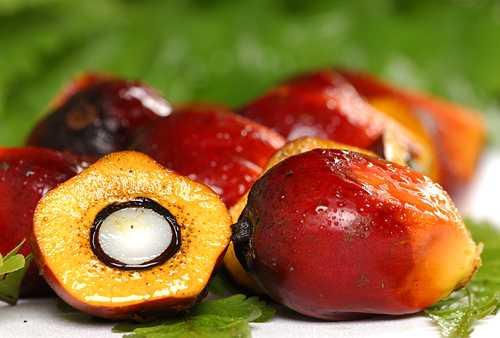 Что такое пальмовое масло и в чем его польза