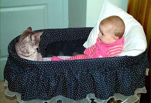 кошка переносчик Токсоплазмоза