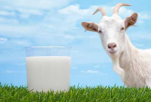 Коза, трава и стакан молока