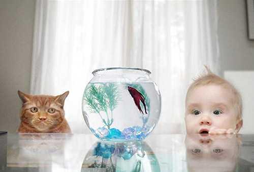 Ребенок и кот смотрят на аквариум