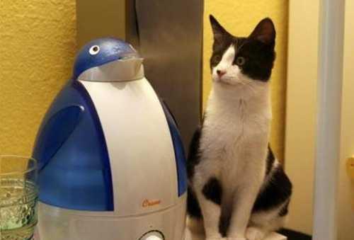 Кот и увлажнитель воздуха в виде пингвина