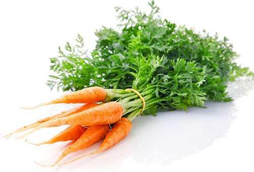 Связка молодой моркови