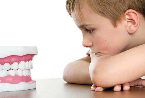 Ребенок смотрит на макет челюсти