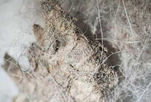 Комнатная пыль