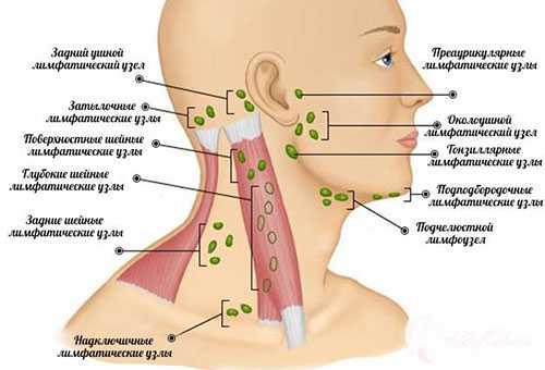 Расположение лимфатических узлов в области шеи