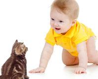 Кошка и маленький ребенок в доме