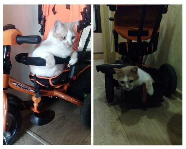 Быть или не быть коту в доме