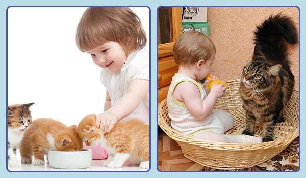 Забота ребенка о питомце